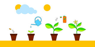 House plant growth and care advice infographics, vector illustration Stock Photos