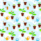 House plant growth and care advice seamless pattern, vector Stock Photography