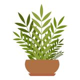 House plant icon, flat style. House plant icon. Flat illustration of house plant vector icon for web Royalty Free Stock Photo