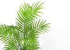 House Plant Leaves Stock Photography