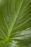 House plant macro Royalty Free Stock Image