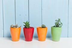 House plant stock photos