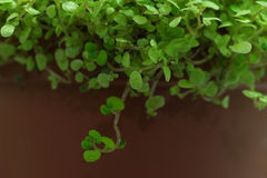 House plant in a pot. Close-up Stock Image