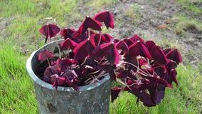 House plant retro pot Royalty Free Stock Image