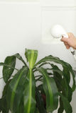 House Plant Shower Royalty Free Stock Photos