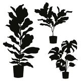 House plant silhouette set isolated. House plant in pot vector silhouette set isolated on white background royalty free illustration
