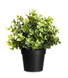 House plant Stock Photography