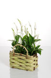House plants Stock Images