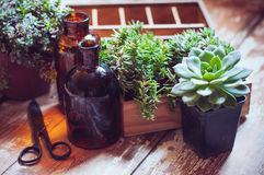 House plants and bottles Stock Photo