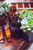 House plants and bottles Royalty Free Stock Photography