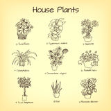 House plants drawing. Sketch vector Royalty Free Stock Photo