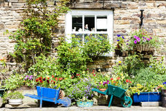 House with plants, England Stock Images