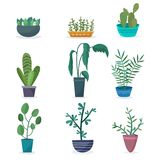 House plants and flowers in pots. Flat cartoon style vector illustration vector illustration