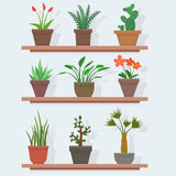 House plants and flowers in pots. Flat style vector illustration stock illustration