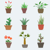 House plants and flowers in pots. Stock Images