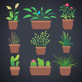House plants, flowers in pots. Vector flat icons Royalty Free Stock Images