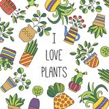 House plants flowers in pots vector set collection. House plants flowers in pots vector set colorful doodle icons collection vector illustration