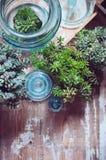 House plants Royalty Free Stock Photo