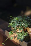 House plants, green succulents in a wooden box on a wooden table Royalty Free Stock Photos