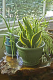 House Plants Growing Wild Stock Photography
