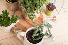 House plants in pots royalty free stock images