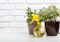 House plants in pots. Succulents, house plants in pots Stock Image