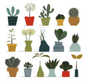 House plants in pots Stock Images