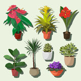 House plants set Royalty Free Stock Photo