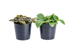 House plants on white background. Royalty Free Stock Photography