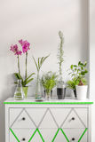 House plants on a white chest of drawers decorated with washi tape. Cropped shot of house plants standing on a white chest of drawers decorated with washi tape Stock Images