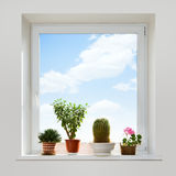 House plants on the windowsill. Royalty Free Stock Photography