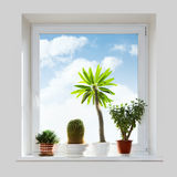 House plants on the windowsill. Royalty Free Stock Photo