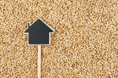 House pointer, the price tag lies on  barley Stock Image