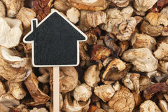 House pointer, the price tag lies on  dried  mushroom Stock Images