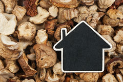 House pointer, the price tag lies on  dried  mushroom Stock Photography