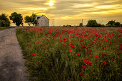 The house in the poppies field Stock Photos