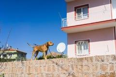 House protecting dog Royalty Free Stock Photo