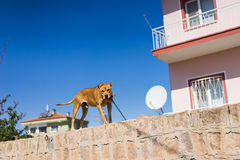 House protecting dog Stock Photo