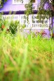 house purplen Arkivfoto