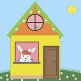 House rabbit Royalty Free Stock Photos