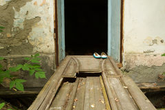 House for ramblers. Plaster crumbles from the walls. The door is broken. Women's shoes are on the threshold of the door. Shoes gentle blue Royalty Free Stock Image