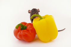House rat and peppers Stock Images