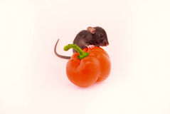 House rat and peppers Royalty Free Stock Photo