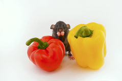 House rat and peppers Stock Image
