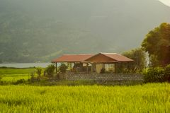 A house with a red roof in bright green rice fields against a lake and wooded mountains. House with a red roof in bright green rice fields against a lake and royalty free stock photo