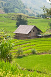 House on Rice Field Royalty Free Stock Photos