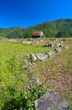 House and Rice Field Royalty Free Stock Photography