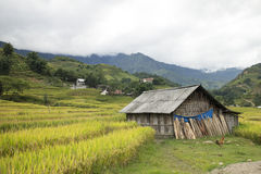 House among the rice field Stock Images