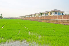 House and the rice field Royalty Free Stock Images