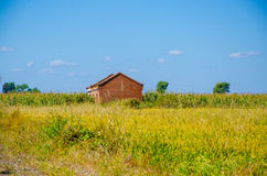 A house in the Rice field under blue sky Stock Photo